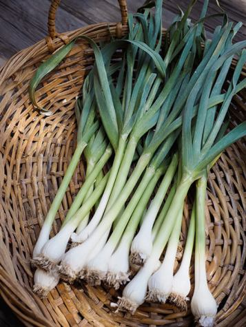 Green Garlic For reference. Via Garden Betty and Food Network